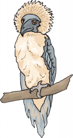 Harpy Eagle clipart