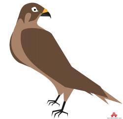 Cooper's Hawk clipart cute