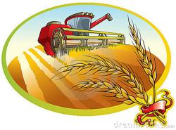 Grains clipart wheat harvest