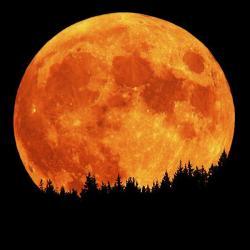 Harvest Moon clipart