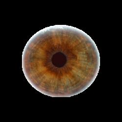 Hazel Eyes clipart brown eyeball