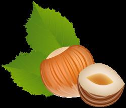 Nut clipart hazelnut