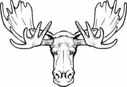 Drawn moose face