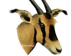 Oryx clipart face