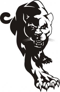 Drawn cougar black jaguar