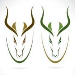Springbok clipart head