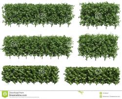 Hedges clipart green