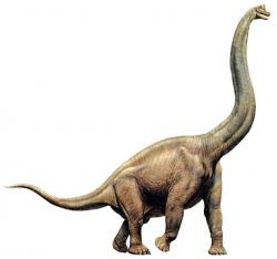 Brachiosaurus clipart long neck
