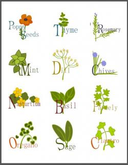 Herbs And Spices clipart n spice