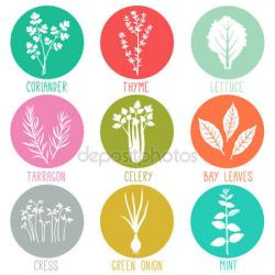 Turmeric clipart herbs and spice