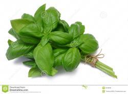 Basil clipart herb