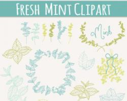 Drawn mint clipart