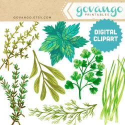Basil clipart parsley