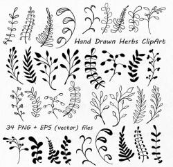 Drawn herbs hand drawn