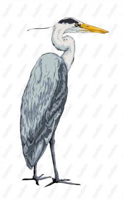 Great Blue Heron clipart cartoon
