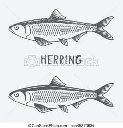 Herring clipart Mackerel ClipArt