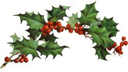 Poinsettia clipart boughs holly