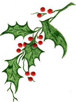 Holley clipart holly plant