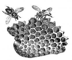 Drawn bee bee honeycomb