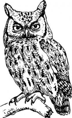 Barred Owl clipart line art