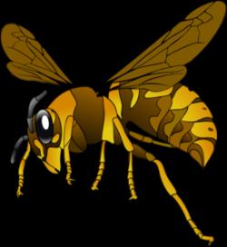 Wasp clipart hornet