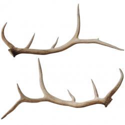 Hook clipart elk antler