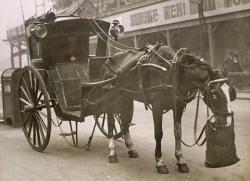Drawn trolley london horse