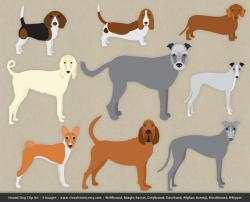 Beagle clipart bloodhound