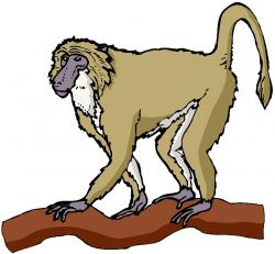 Baboon clipart moneky
