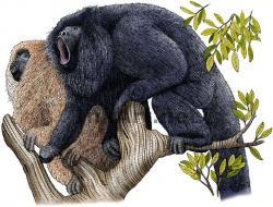 Chimpanzee clipart unbelievable