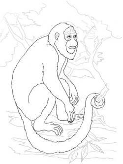 Howler Monkey clipart