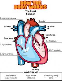 Organs clipart kids health
