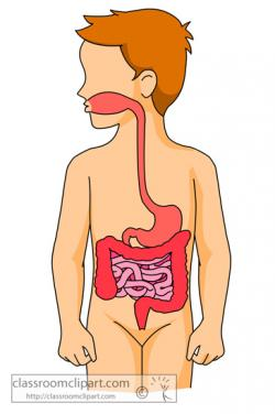 Human clipart digestive system