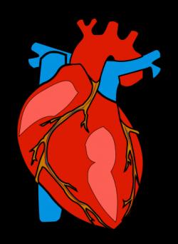 Medicinal clipart heart