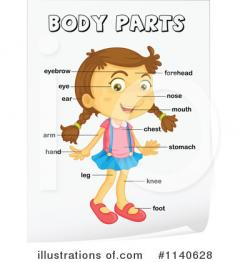 Human clipart human body part
