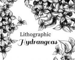 Chrysanthemum clipart hydrangea