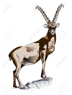 Goat clipart ibex