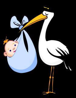 Pelican clipart baby