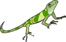 Green Iguana clipart desert lizard