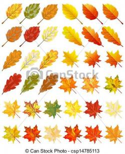 Drawn foliage autumn leaf