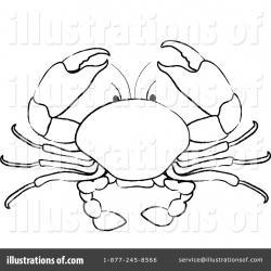 Drawn crab mud crab