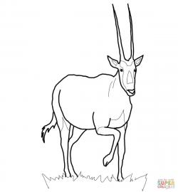Antelope clipart oryx
