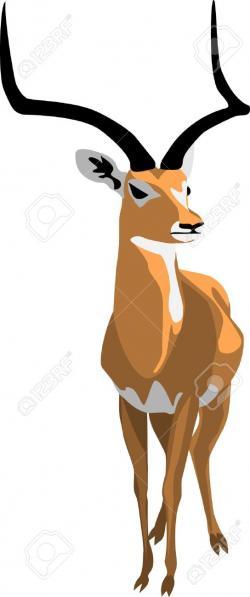 Gazelle clipart vector