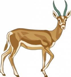 Gazelle clipart impala