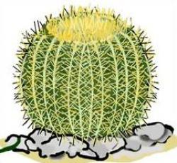 In The Desert clipart barrel cactus