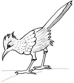Roadrunner clipart bird
