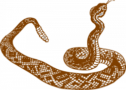 In The Desert clipart desert snake