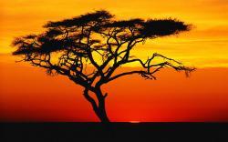 Sahara clipart desert sun