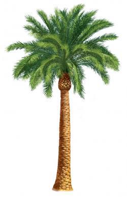 Cuba clipart palm tree