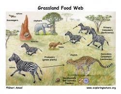 Savannah clipart grassland habitat